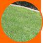 icon3 lawn care