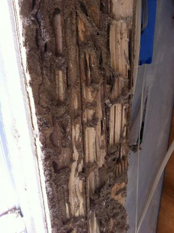Termite Inspections & Control